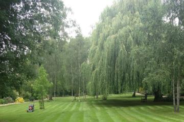 Commercial Garden
